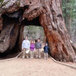 The Thomas kids are standing in a giant sequoia on a road cut though the middle