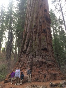 The Thomas kids are standing at the base of a giant sequoia