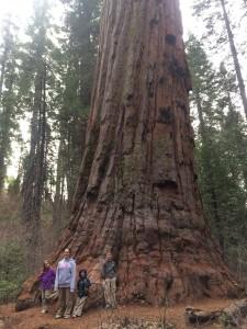 Big Trees One