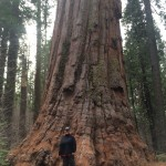 Cindy is standing at the foot of a giant sequoia