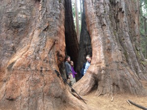 The kids standing in the root system of a standing but dead giant sequoia