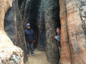 Shows Cindy and Nathan in the trunk and root system of a giant sequoia
