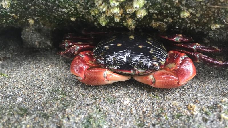 Oregon Tide Pooling