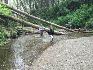 Crossing the creek in Fern Canyon