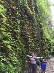 A wall of ferns in Fern Canyon