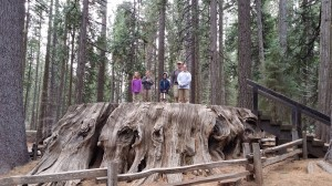 The family standing on a former dance floor made from the base of a felled sequoia