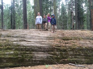 Our kids standing on a tree in Big Trees State Par that was felled long ago