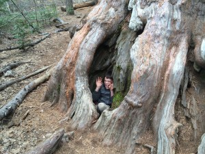 Nathan inside a root of a giant sequoia