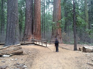 Cindy on the path in Big Trees State Park in Calaveras County in California