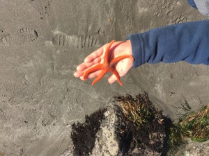 Holding a sea star