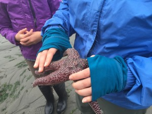 A purple starfish found in a tidepool being held by Elisa