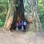 The kids posing in a redwood trunk