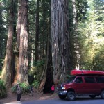 The van in front of a redwood